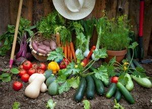 www-allotment-garden-org