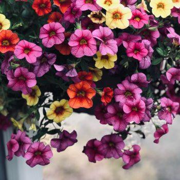 Winter Blooms
